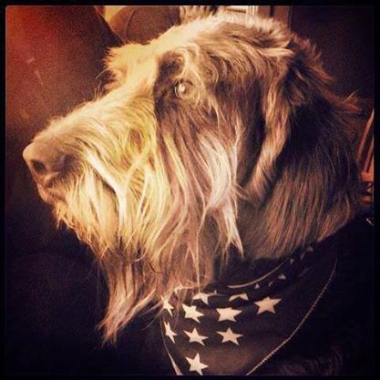 Book: In Dogs We Trust - Gander